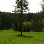 Old Peak Road Meadow, City of Corvallis Watershed, Benton County, Oreogn